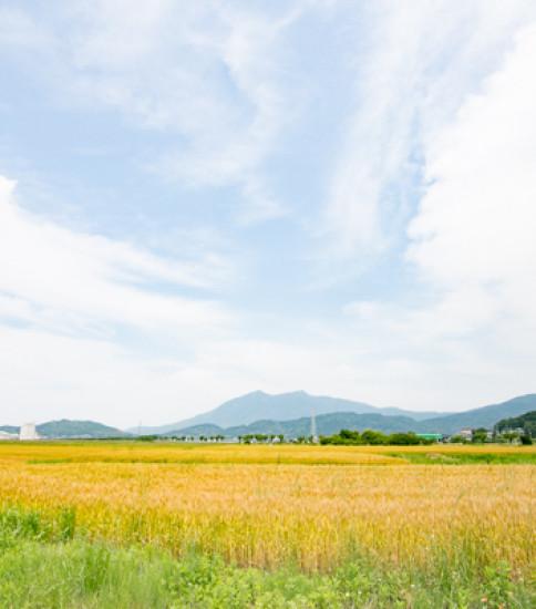 爽やかな初夏の風が快適!りんりんロードサイクリング♪