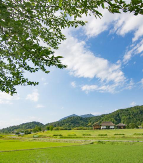 美しい空と雲と緑の季節