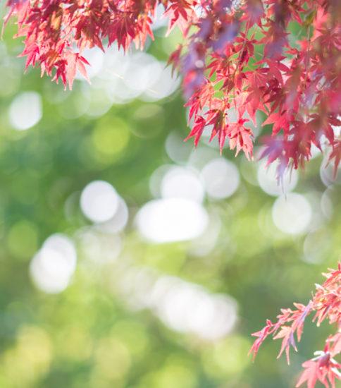 芸術の秋を満喫「第5回つくば国際野外芸術・周辺の美学展」開催中!