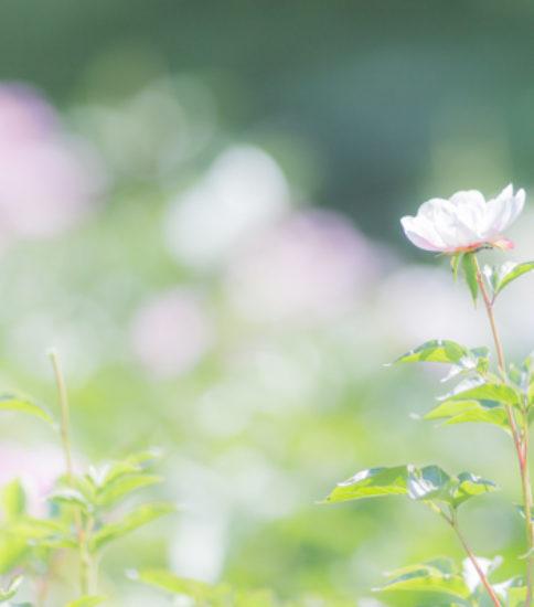 「筑波山麓写真部はじまりました」一緒に写真を楽しむ部員を募集します♪